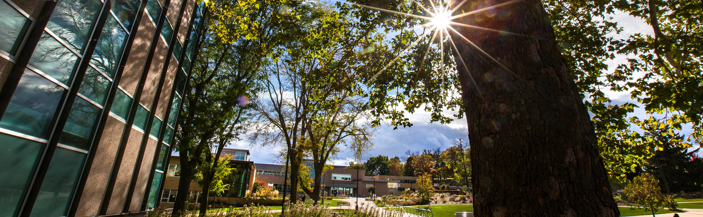 Sun shining through foliage, overlooking the university mall.