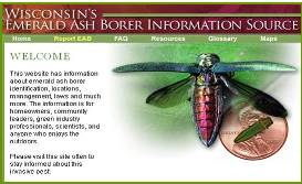 screen shot of web site Wisconsin's emerald ash borer information source